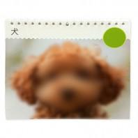 ペット好きにはたまらない 癒しのカレンダー